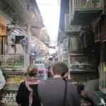Suzhou pet market