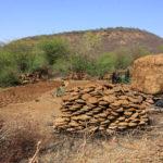 Bouses séchant au soleil, Bundi, Rajasthan, Inde