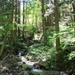 Forêt, Japon