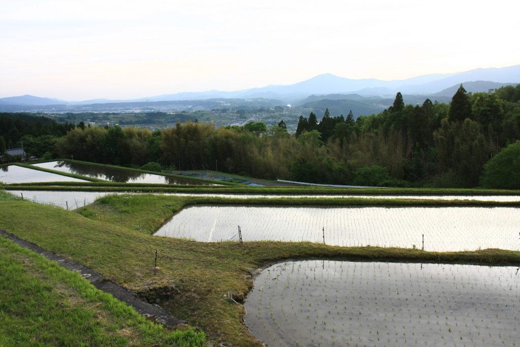 Rizières à Magome-juku, Japon