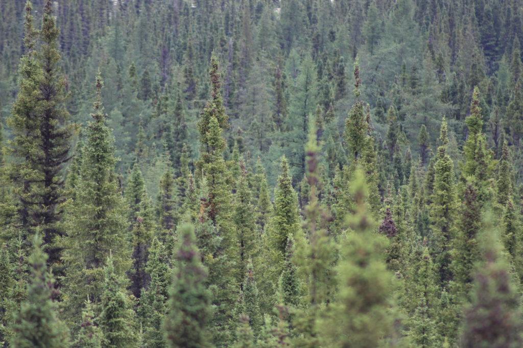 Des arbres!