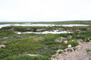Décor sur la côte du Labrador